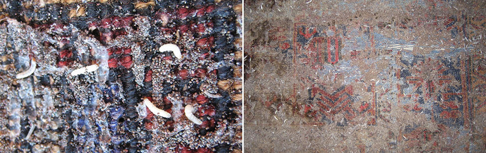 Moths (left) - Moths feeding on a rug (right)